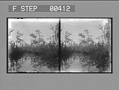 view [View from mid-river of trees on shore.] Stereo photonegative digital asset: [View from mid-river of trees on shore.] Stereo photonegative.