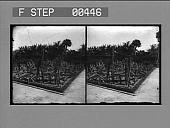 view The Cactus Garden on the Cragin Estate, Lake Worth, Fla. Active no. 855 : stereo photonegative digital asset: The Cactus Garden on the Cragin Estate, Lake Worth, Fla. Active no. 855 : stereo photonegative.