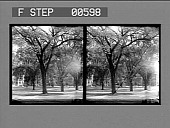 view Among the elms, Quadrangle of Harvard College, Cambridge. [Active no. 12828 : stereo photonegative.] digital asset: Among the elms, Quadrangle of Harvard College, Cambridge. [Active no. 12828 : stereo photonegative.]