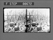 view The cactus room in the Phipps Conservatory, Schenley Park. Active No. 13204 : stereo photonegative digital asset: The cactus room in the Phipps Conservatory, Schenley Park. Active No. 13204 : stereo photonegative, 1906.