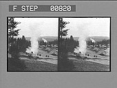 view [Tourists view geyser in action : stereo photonegative,] digital asset: [Tourists view geyser in action : stereo photonegative,] 1904.