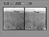 view [Huge horse-drawn combine harvester in action. Stereo photonegative,] digital asset: [Huge horse-drawn combine harvester in action. Stereo photonegative,] 1904.