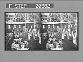 view [Overview of men butchering beef. Stereo photonegative,] digital asset: [Overview of men butchering beef. Stereo photonegative,] 1904.