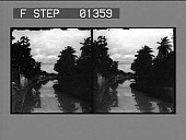 view [River and trees: stereo photonegative.] digital asset: [River and trees: stereo photonegative.]