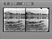 view Huge alligators emerging from the waters of an Indian lake. Active no. 13108 : stereo photonegative digital asset: Huge alligators emerging from the waters of an Indian lake. Active no. 13108 : stereo photonegative.