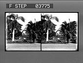 view [Honolulu; visitors in lush municipal park : stereo photonegative.] digital asset: [Honolulu; visitors in lush municipal park : stereo photonegative.]
