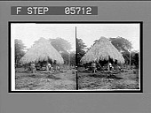 view Rude life of the natives--a hut in the tropical jungles of Panama. 11516 Interpositive digital asset: Rude life of the natives--a hut in the tropical jungles of Panama. 11516 Interpositive 1906.