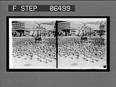 view A market-place paved with pigeons--all animal life is sacred in India. 14024 Interpositive digital asset number 1