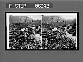 view Picking tea on Sir Thomas Lipton's famous tea plantation at Polgahawela. 14314 Interpositive digital asset: Picking tea on Sir Thomas Lipton's famous tea plantation at Polgahawela. 14314 Interpositive.