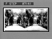 view Tropical beauty in the Botanical Gardens, Rio de Janeiro. [Active no. 18705 : stereo interpositive.] digital asset: Tropical beauty in the Botanical Gardens, Rio de Janeiro. [Active no. 18705 : stereo interpositive.]