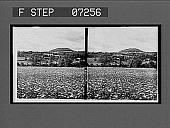 view [Blossoms.] 21089 interpositive digital asset: [Blossoms.] 21089 interpositive.
