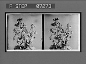 view [Blossoms.] [Active no. 21104: stereo interpositive] digital asset: [Blossoms.] [Active no. 21104: stereo interpositive].
