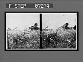 view [Blossoms.] 21107 interpositive digital asset: [Blossoms.] 21107 interpositive.