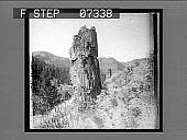 view Petrified trees near Yancey's. 12100 interpositive digital asset: Petrified trees near Yancey's. 12100 interpositive 1904