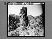 view Petrified trees near Yancey's 12100 interpositive digital asset: Petrified trees near Yancey's 12100 interpositive 1904.