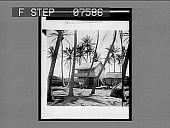 view [Honolulu; home surrounded by palm trees.] 51 Interpositive digital asset: [Honolulu; home surrounded by palm trees.] 51 Interpositive.