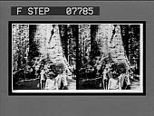 view [Mixed group at base of huge tree. No. US B-12. Stereo interpositive.] digital asset: [Mixed group at base of huge tree. No. US B-12. Stereo interpositive.]
