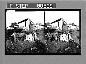 view [Portrait of large family group outdoors.] 368 Stereo photonegative digital asset: [Portrait of large family group outdoors.] 368 Stereo photonegative.
