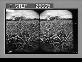 view [Agriculture.] 547 Photonegative digital asset: [Agriculture.] 547 Photonegative.