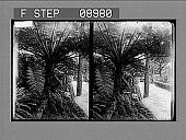 view [Garden.] 1063 Photonegative digital asset: [Garden.] 1063 Photonegative.