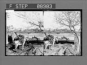 view [Donkey beside wide river in the Orient.] photonegative digital asset: [Donkey beside wide river in the Orient.] photonegative.