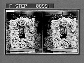 view [Copy of bust portrait of William Jennings Bryan, framed in flowers. Active no. 1116 : stereo photonegative.] digital asset: [Copy of bust portrait of William Jennings Bryan, framed in flowers. Active no. 1116 : stereo photonegative.]