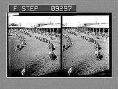 view Exhibit of Thoroughbred Livestock. [Caption 1537 : glass stereoscopic photonegative,] digital asset: Exhibit of Thoroughbred Livestock. [Caption 1537 : glass stereoscopic photonegative,] 1905.