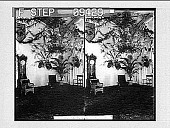 view [Room with chairs and plants.] 1741 photonegative digital asset number 1