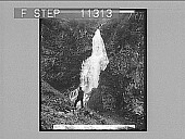view The Sevle Falls--dashing and splashing--near Stalheim's Hotel--in the Naerodal. 656 Photonegative digital asset: The Sevle Falls--dashing and splashing--near Stalheim's Hotel--in the Naerodal. 656 Photonegative 1905