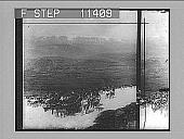 view Herd of reindeer, useful creatures of the frozen north on snowy heights of Hardanger Glacier. 743 Photonegative 1905 digital asset number 1