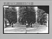 view [Forest scene in Sweden. Active no. 923 : stereo photonegative,] 1896 digital asset number 1