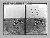 view Miles on miles of peaceful pastures where windmills beckon to each other--(N. of Amsterdam). [Active no. 1531: stereo photonegative,] 1905 digital asset number 1