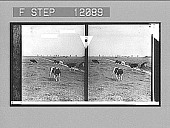 view Miles on miles of peaceful pastures where windmills beckon to each other--(N. of Amsterdam). 1531 Photonegative 1905 digital asset number 1