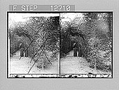 view Bower of St. Anthony, Vatican Garden, Rome. 1982 Photonegative 1908 digital asset number 1