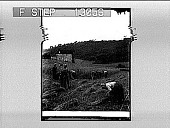 view Harvesting wheat in the Basque Province of Guipúzcoa, Northern Spain. 2272 Photonegative digital asset: Harvesting wheat in the Basque Province of Guip{acute}uzcoa, Northern Spain. 2272 Photonegative 1900.