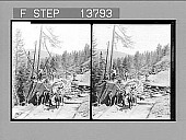 view [Lumberring scene. Active no. 8869 : stereo photonegative,] 1905 digital asset number 1