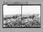 view [Farm scene. Active no. 8870 : stereo photonegative], 1905 digital asset number 1