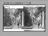 "view ""...Hospital Grounds, Honolulu, Hawaiian Islands. Copyright 1896 by Strohmeyer & Wyman."" Active no. 8880 : Stereo photonegative, 1896 digital asset number 1"