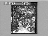 """view """"Addison's Walk""""--a famous forest-aisle in Magdalen College grounds, Oxford. [Active no. 9387 : non-stereo photonegative,] digital asset: """"Addison's Walk""""--a famous forest-aisle in Magdalen College grounds, Oxford. [Active no. 9387 : non-stereo photonegative,] 1905."""