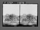 view Chiffchaff, its nest and eggs. [Active no. 10114 : stereo photonegative,] 1905 digital asset number 1