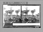 view Drink for 5,000 thirsty sheep on a big ranch at Warrah. 10285 Photonegative digital asset: Drink for 5,000 thirsty sheep on a big ranch at Warrah. 10285 Photonegative 1908.
