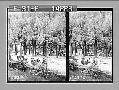 view Christmas holiday pleasures at the Fern Tree Bower, near Hobart. 10293 Photonegative digital asset: Christmas holiday pleasures at the Fern Tree Bower, near Hobart. 10293 Photonegative 1908.