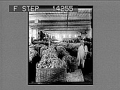 view Tons of assorted wool ready for use in woolen mills. 10788 photonegative digital asset: Tons of assorted wool ready for use in woolen mills. 10788 photonegative.