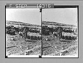 view [Landscape in Palestine.] 10830 Photonegative 1907 digital asset number 1
