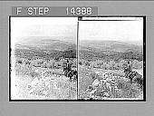 view [Landscape in Palestine.] 10910 Photonegative 1910 digital asset number 1