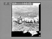 view [Landscape in Palestine.] 10938 Photonegative 1910 digital asset number 1