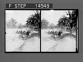 view Peculiar double-decked horse cars on a suburban street, Bagdad, Mesopotamia. No. 11483 : stereoscopic photonegative digital asset: Peculiar double-decked horse cars on a suburban street, Bagdad, Mesopotamia. No. 11483 : stereoscopic photonegative, 1912.