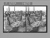 view [Fishing industry scene.] 12188 Photonegative digital asset: [Fishing industry scene.] 12188 Photonegative 1900.