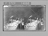 view [Women workers at long tables indoors processing fish products], No. 12196 : Photonegative digital asset: [Women workers at long tables indoors processing fish products], No. 12196 : Photonegative, 1900.