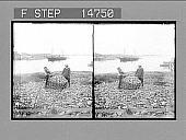 view [Seascape.] 12425 Photonegative digital asset number 1